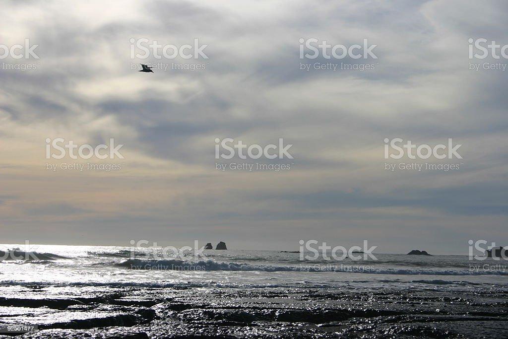 gull fliegt über das Meer Lizenzfreies stock-foto