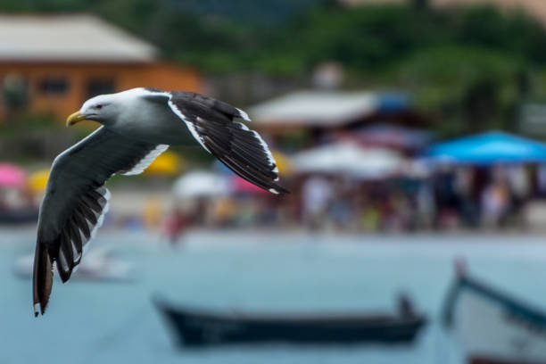 A gull flying over the water at the Pantano do Sul. stock photo