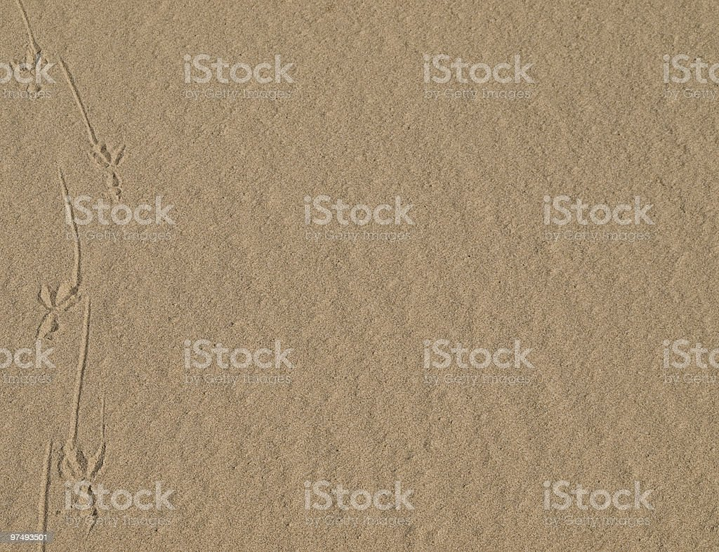 gull footprints on the beach, enough copy space royalty-free stock photo