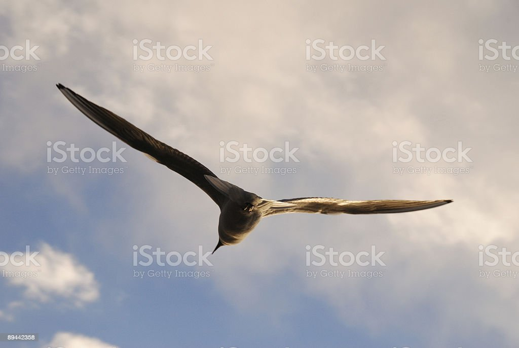 Gull high in the sky royalty-free stock photo