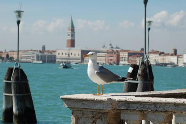 gaviota en venecia - lunes de pascua fotografías e imágenes de stock