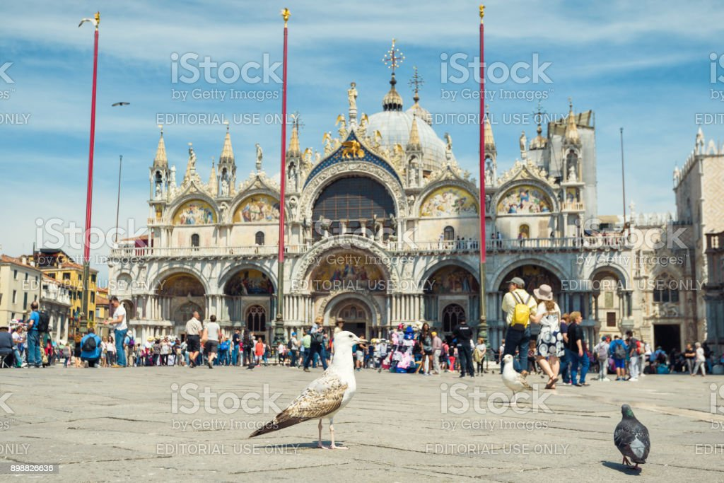Gull is on the Piazza San Marco in Venice stock photo