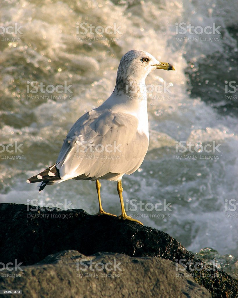 Gull looking at stormy water royalty free stockfoto