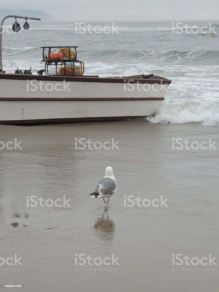 Gull on beach with dory boat in background stock photo