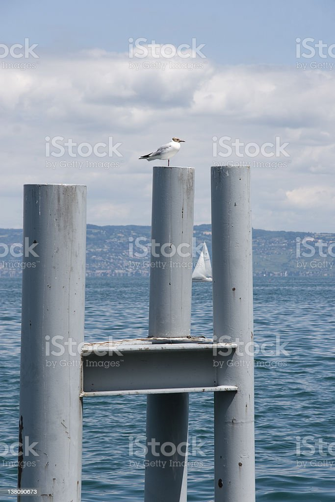 Gull on pole royalty-free stock photo