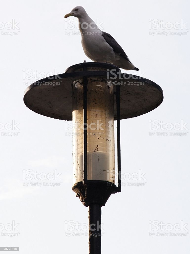 Gull on Post royalty-free stock photo