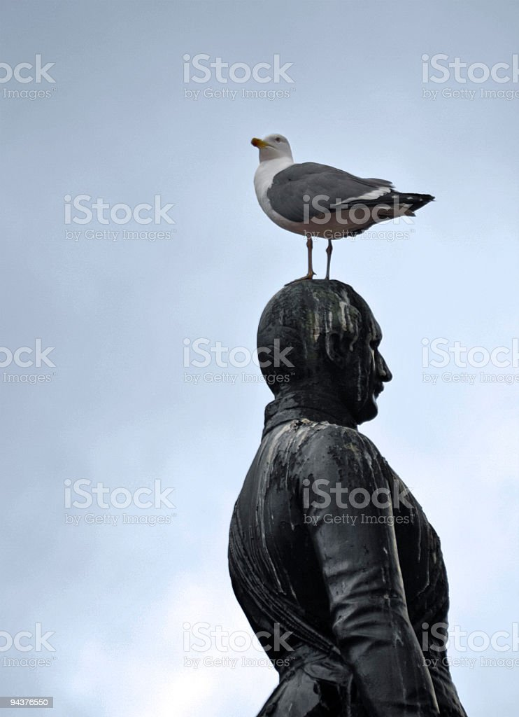 Gull on Prince Albert stock photo