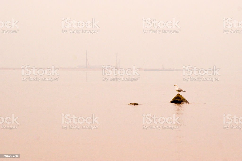 Gull on stone in the sea in the distance in pink tones stock photo
