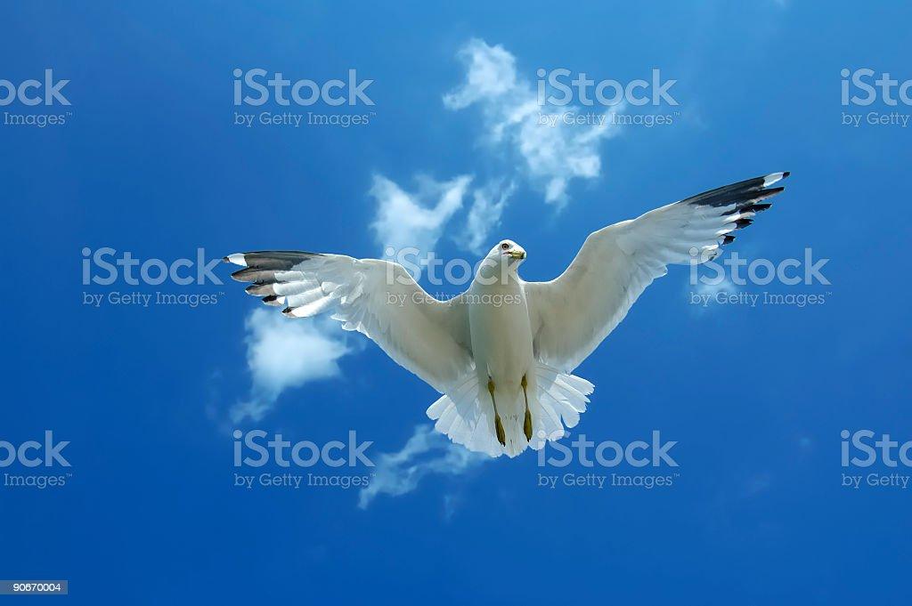 Gull Underheath royalty-free stock photo
