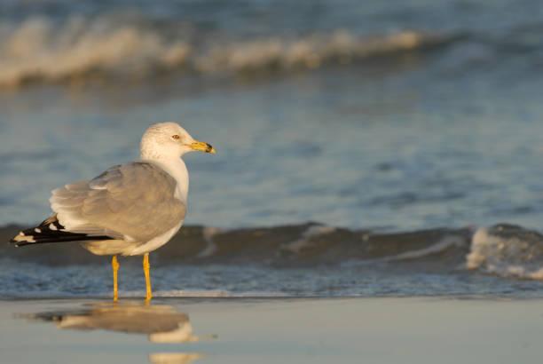 Gull Vacation stock photo