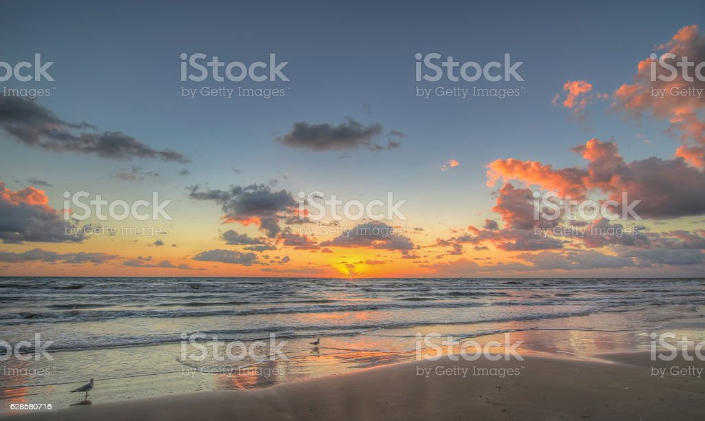Gulls at Sunrise royalty-free stock photo