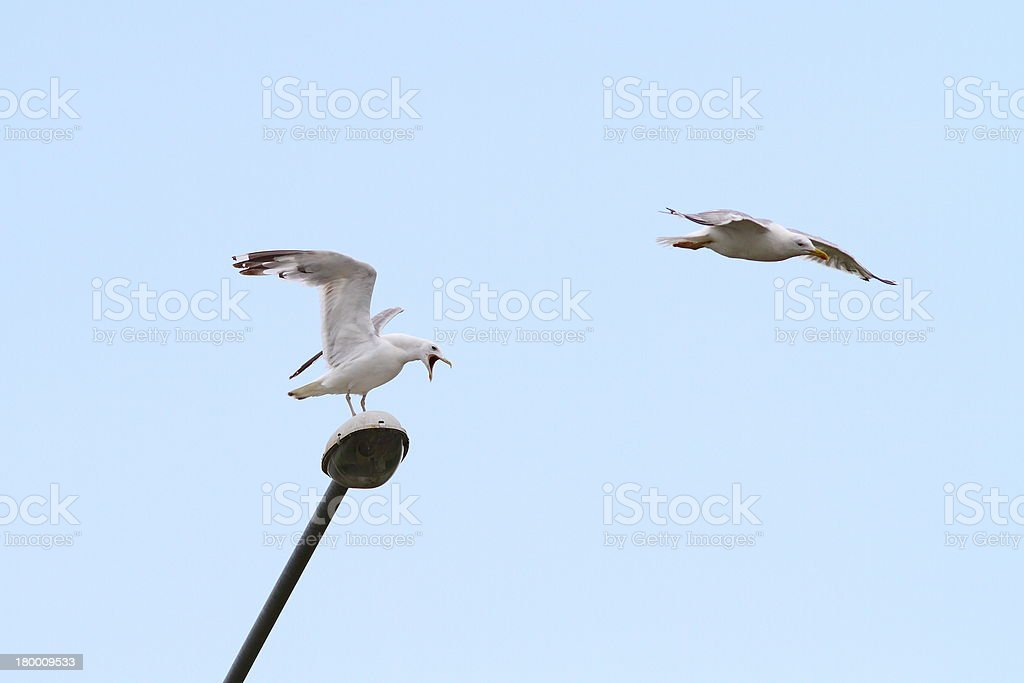 gulls 사각의 lamppost 대한 royalty-free 스톡 사진