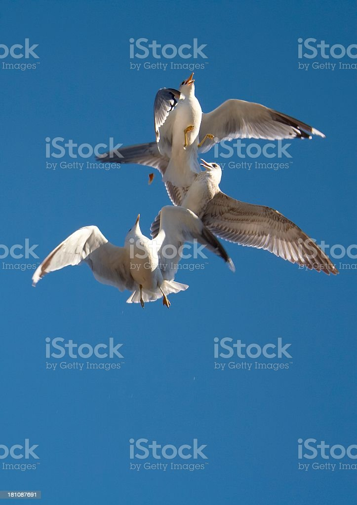 Gulls on a blue sky royalty-free stock photo