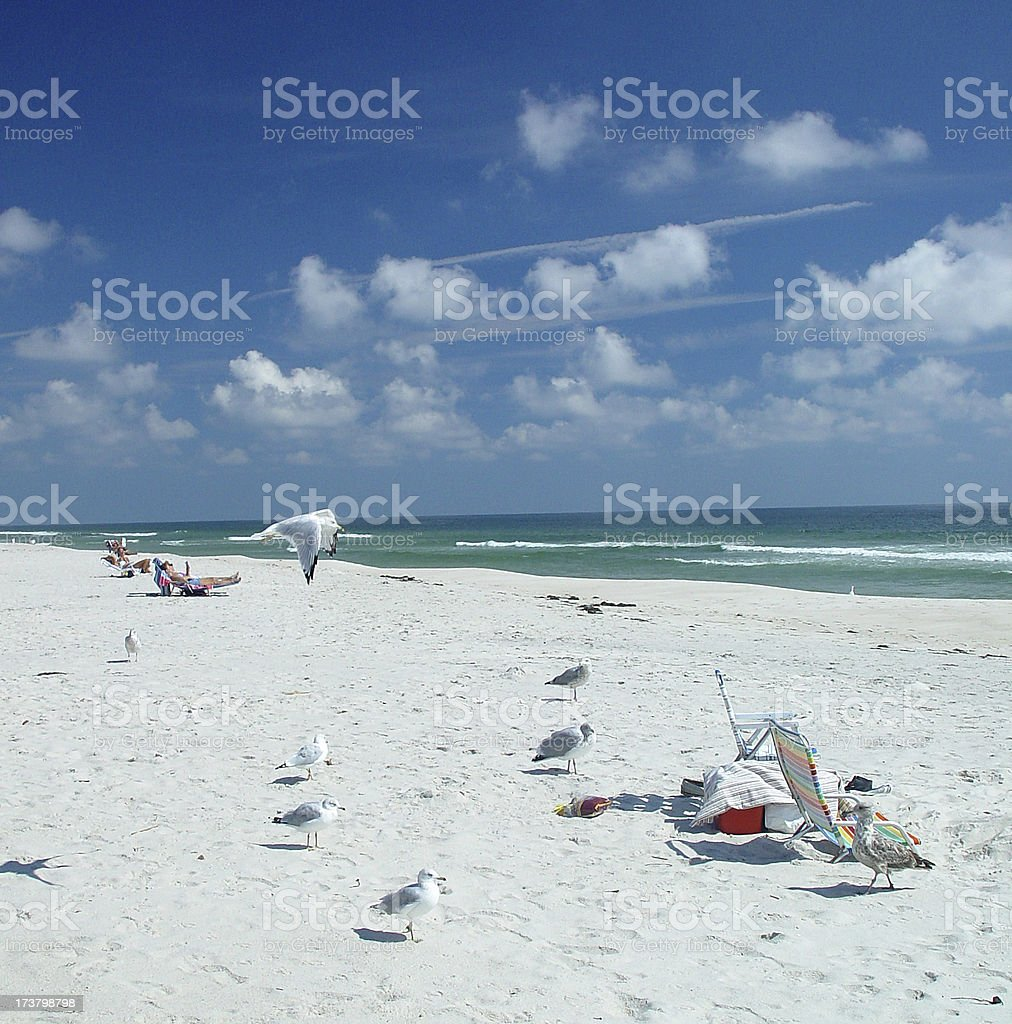 Gulls on the Beach royalty-free stock photo