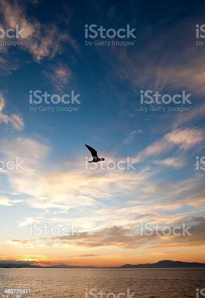 Photo of gulls