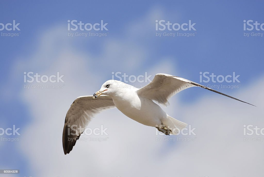 Gull&Sky2 stock photo