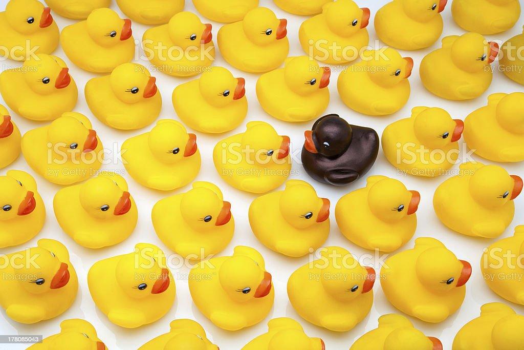 Canard en caoutchouc jaune - Photo