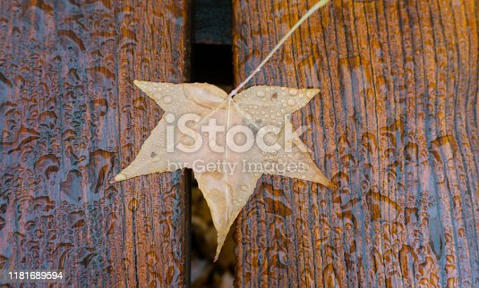 Leaf on bench with water drops
