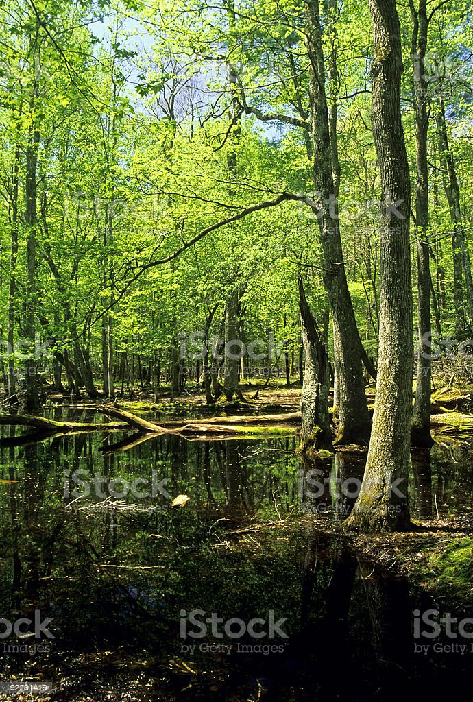 Gum Swamp, Cades Cove, Great Smoky Mtns NP royalty-free stock photo