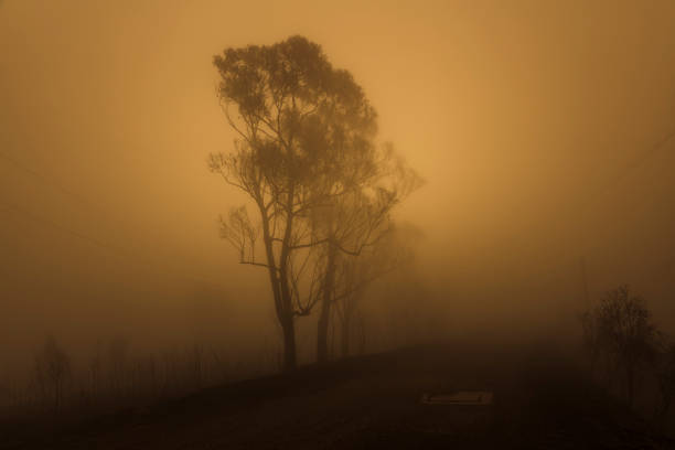Gum trees in thick fog affected by bushfire in The Blue Mountains in Australia stock photo