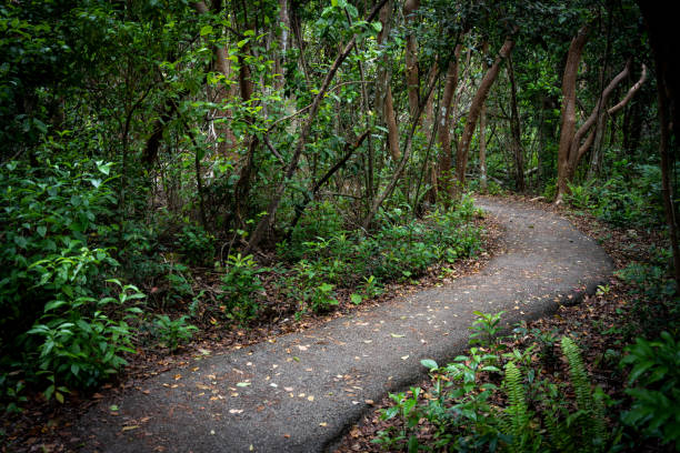Gumbo Limbo Trail Snakes Through Forest stock photo