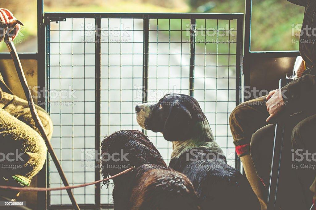 Gun Dogs stock photo