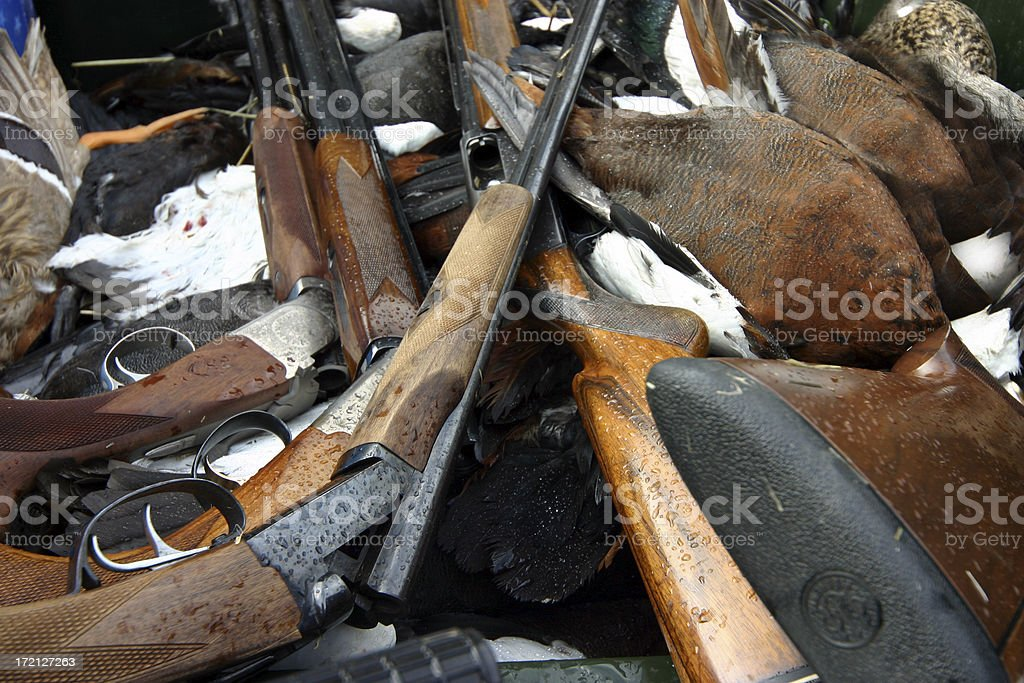 Guns and Ducks royalty-free stock photo