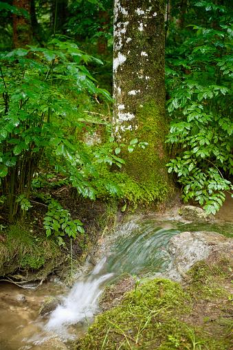 little creek in deep forest