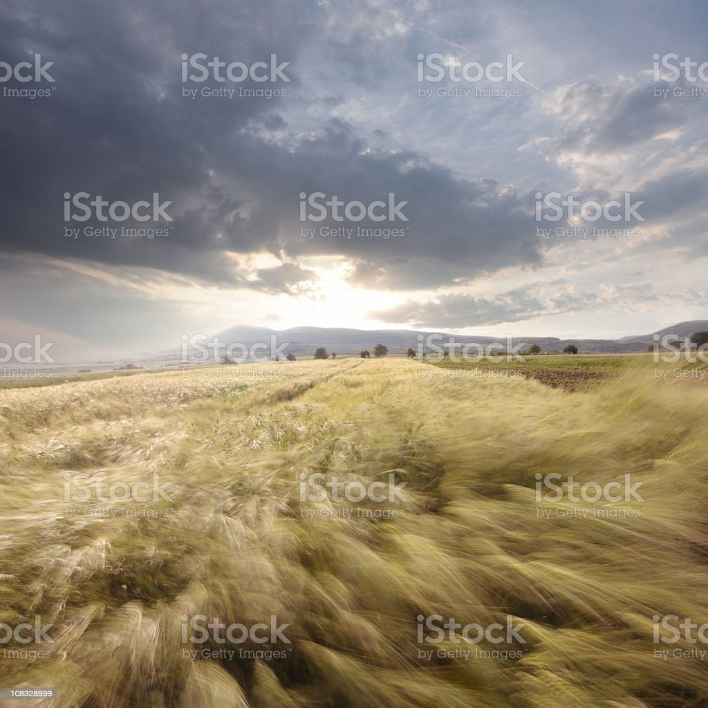 gust of wind royalty-free stock photo