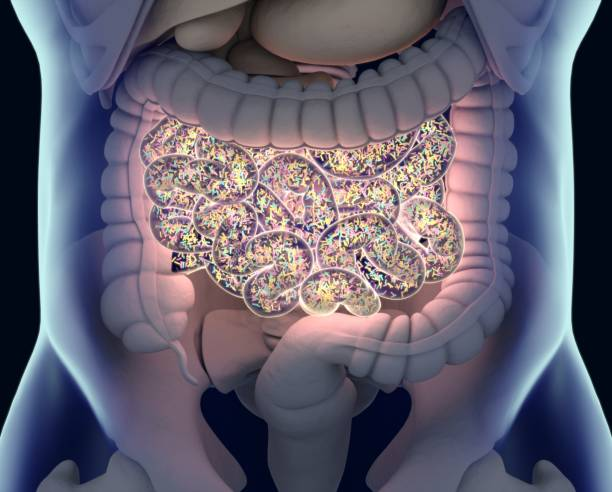 gut bacteria , gut flora, microbiome. bacteria inside the small intestine, concept, representation. 3d illustration. - human digestive system stock pictures, royalty-free photos & images
