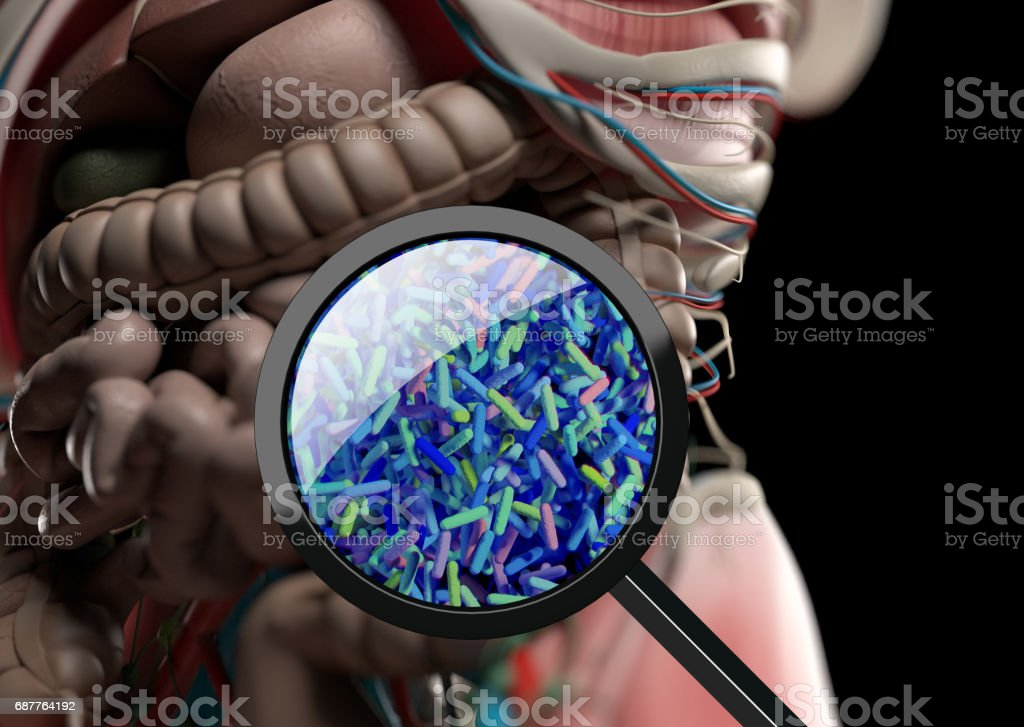 Gut bacteria, microbiome. Bacteria magnified through magnifying glass, concept, representation. 3D illustration. - foto stock