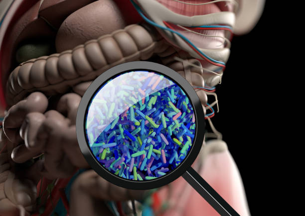 gut bacteria, microbiome. bacteria magnified through magnifying glass, concept, representation. 3d illustration. - microrganismo foto e immagini stock
