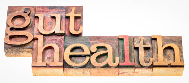 gut health - word abstract in wood type stock photo