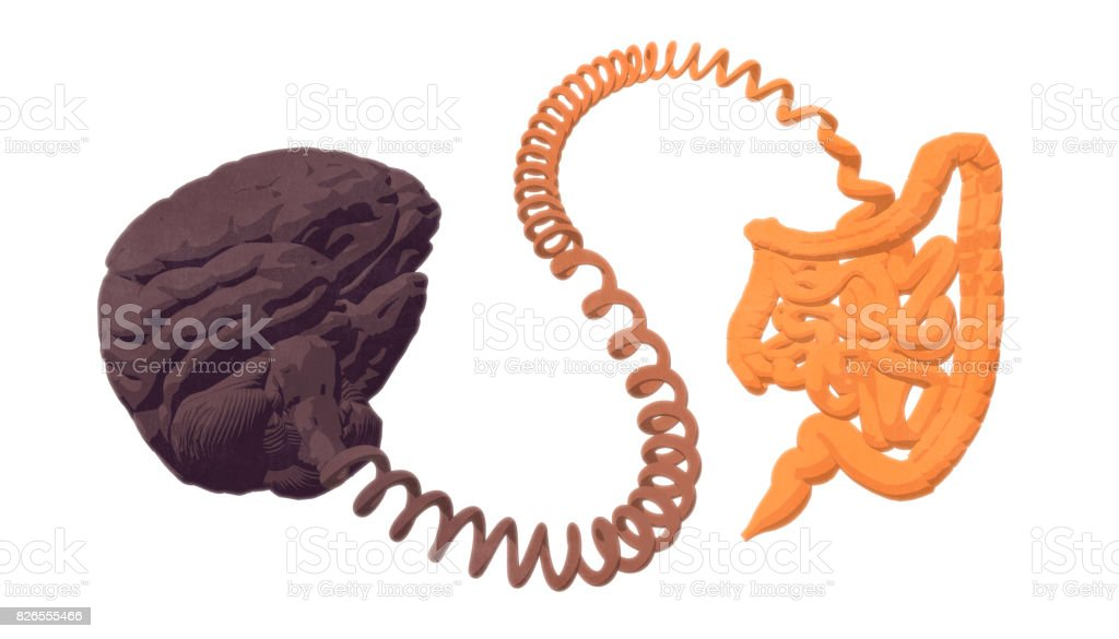 Gut–brain axis. The gut-brain connection. stock photo