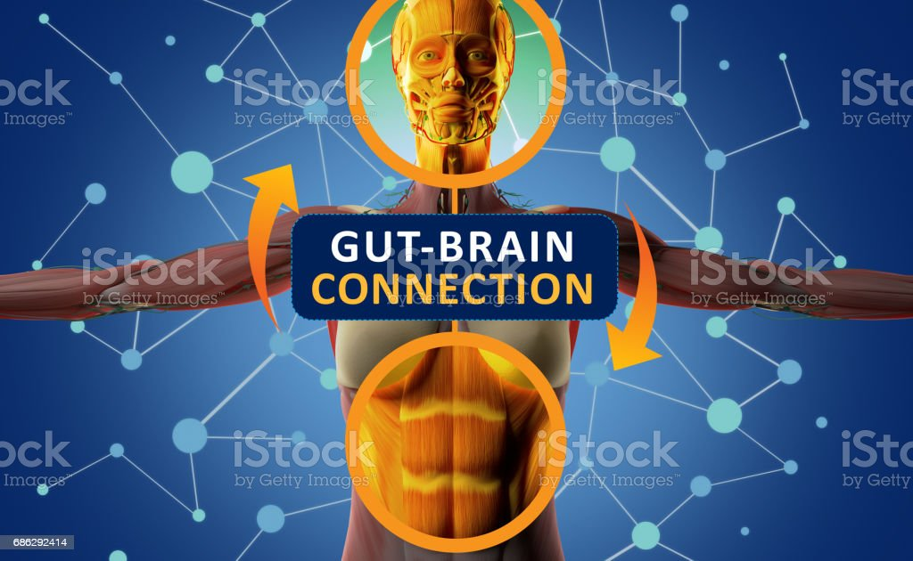Gut-brain connection or gut brain axis. Concept art showing a connection from the gut to the brain. 3d illustration. stock photo