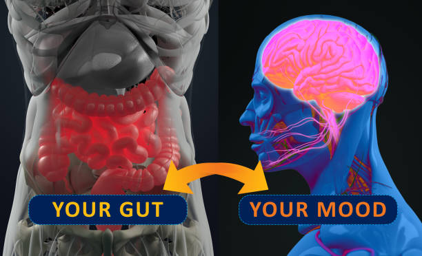 Gut-brain connection or gut brain axis. Concept art showing a connection from the gut, influencing your mood. 3d illustration. stock photo