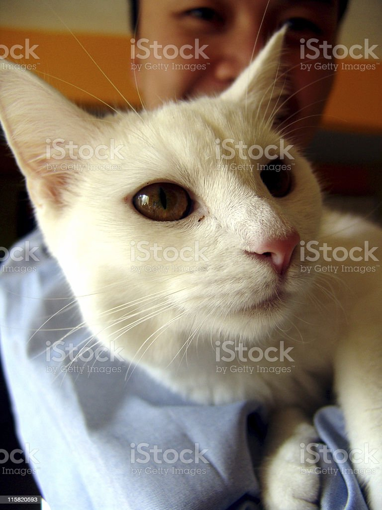 Guy and a Cat royalty-free stock photo