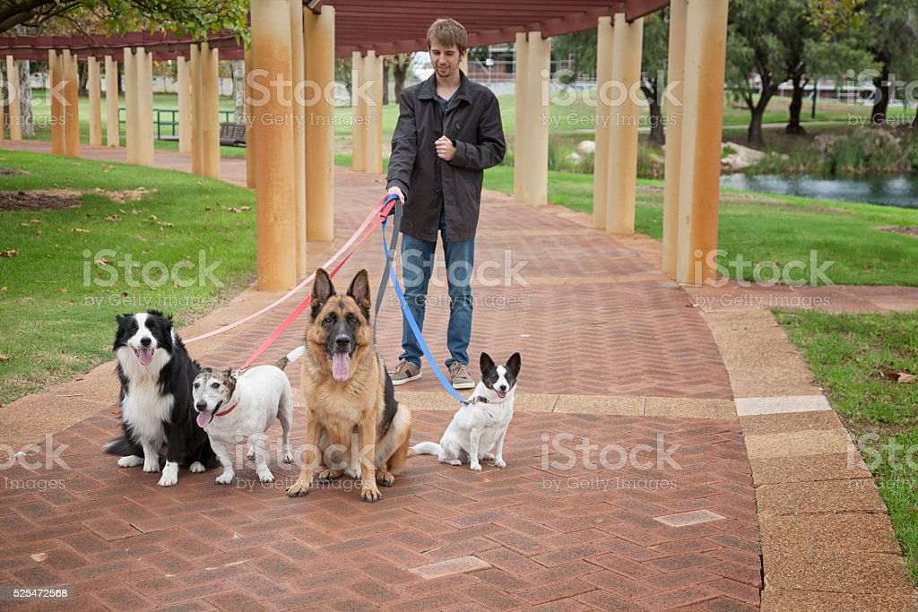 Guy And Four Dogs stock photo