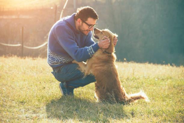 homme et son chien or retriever, nature - canidés photos et images de collection