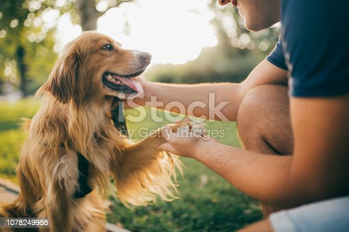 istock Guy and his dog, golden retriever,city park. 1078249958