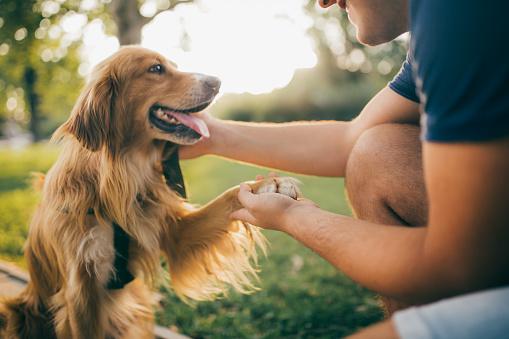 istock Guy and his dog, golden retriever,city park. 1078249958