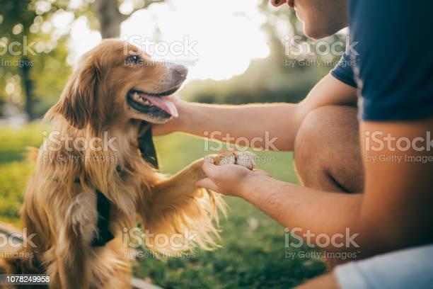 Guy and his dog golden retrievercity park picture id1078249958?b=1&k=6&m=1078249958&s=612x612&h=f17cx kqyaxgtagvqpmz2tbuehr 6jzszudpcxanfdg=