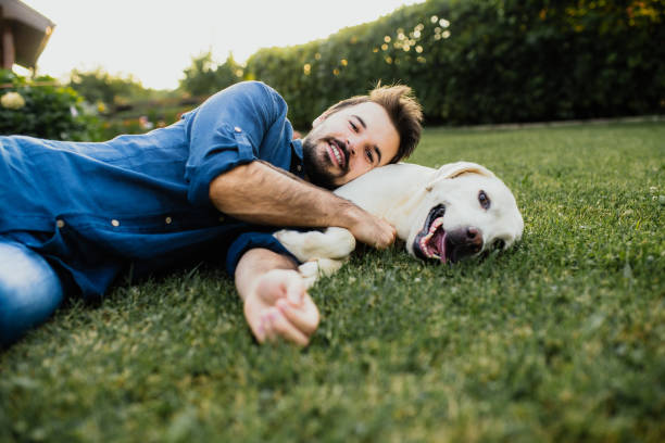 Guy and his dog, labrador retriever, courtyard Guy and his dog, labrador retriever, courtyard retriever stock pictures, royalty-free photos & images