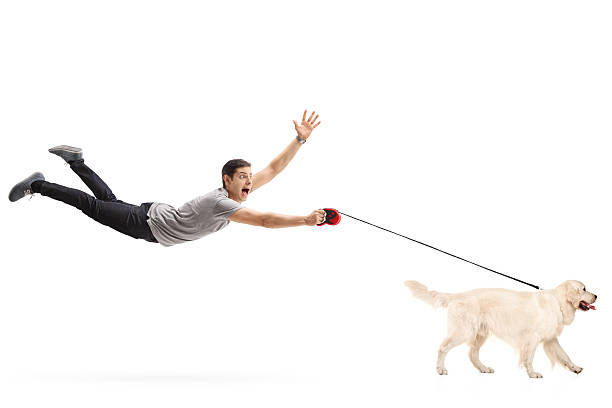 Guy being pulled by his dog Guy being pulled by his dog isolated on white background pulling stock pictures, royalty-free photos & images