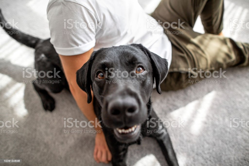Guy With His Dog Sitting At Home Playing Stock Photo & More