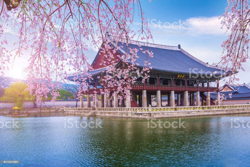gyeongbokgung palace in spring stock photo