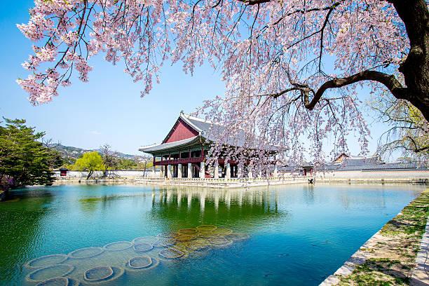 le palais de gyeongbokgung avec fleur de cerisier au printemps, corée du sud - séoul photos et images de collection