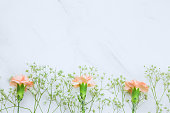 istock Gypsophila and carnation  flowers frame top view 1132183824