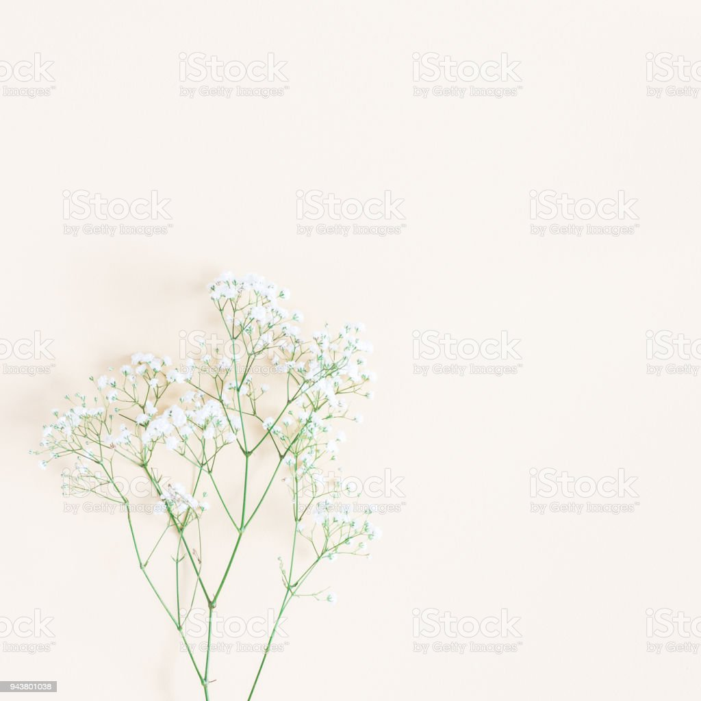 Gypsophila flowers on yellow background. Flat lay, top view stock photo