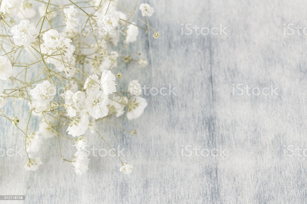 Gypsophila (Baby's-breath flowers) on wooden background. stock photo